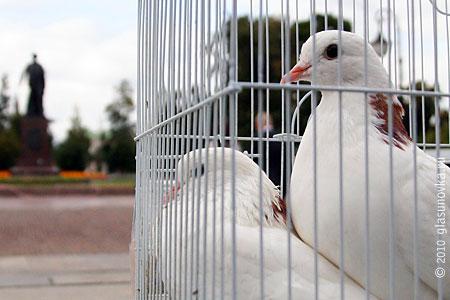 Почтовые голуби сидят и ждут Вашего письма. Мы их кормим, они не жалуются.