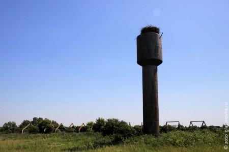 Аисты неподалёку от Подоляни, рядом с бывшим животноводческим комплексом