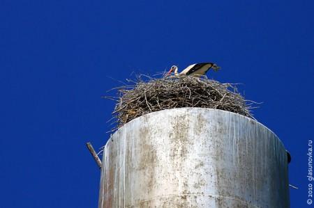 Гнездо белых аистов часто служит домом для птиц поменьше.