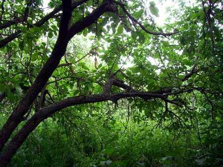 Участок. Яблоневый сад.