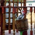 Акция «Рождественский подарок» в храме Рождества Пресвятой Богородицы: участвуй!