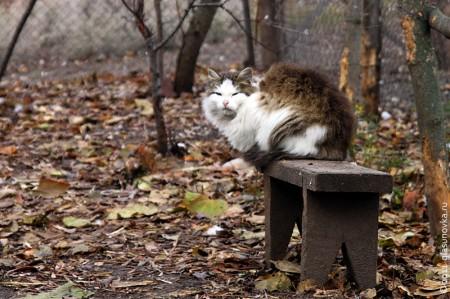 Кошка на лавочке.